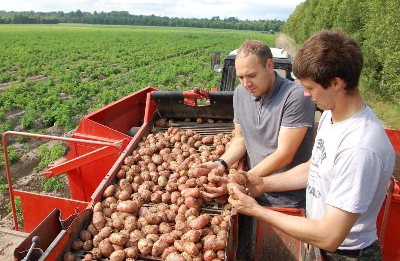 Сельское хозяйство как сделать сам