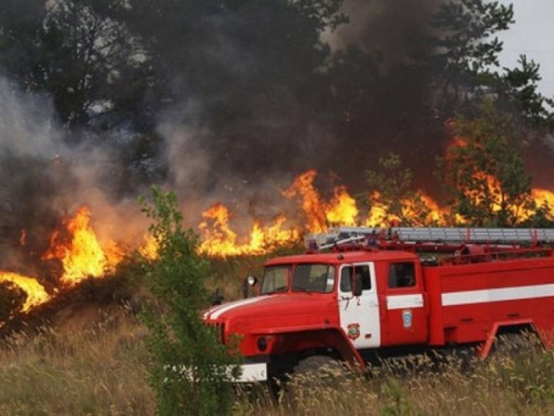 Жителям Кировской области запретили ходить влес